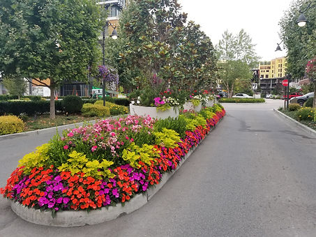 Street divider median landscaped with flowers and trees.
