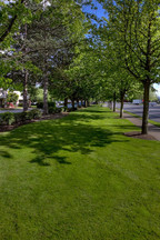 Long strip of well-maintained grass lined with trees.