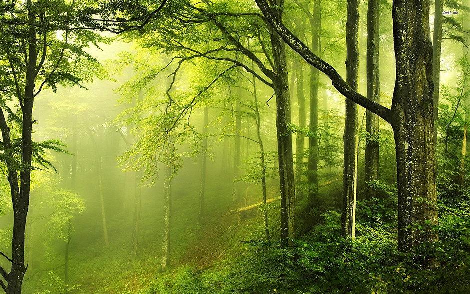 479360-green-forest-wallpaper-1920x1200-