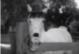oliver hardy horse.jpg