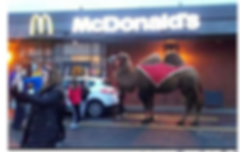 spotted by Bill Crouch camel burger.png
