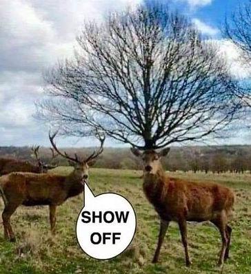 show off.jpg