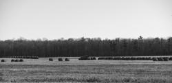 Farmer's Hay Field
