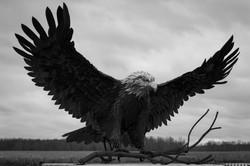 Bald Eagle Monument, Montezuma