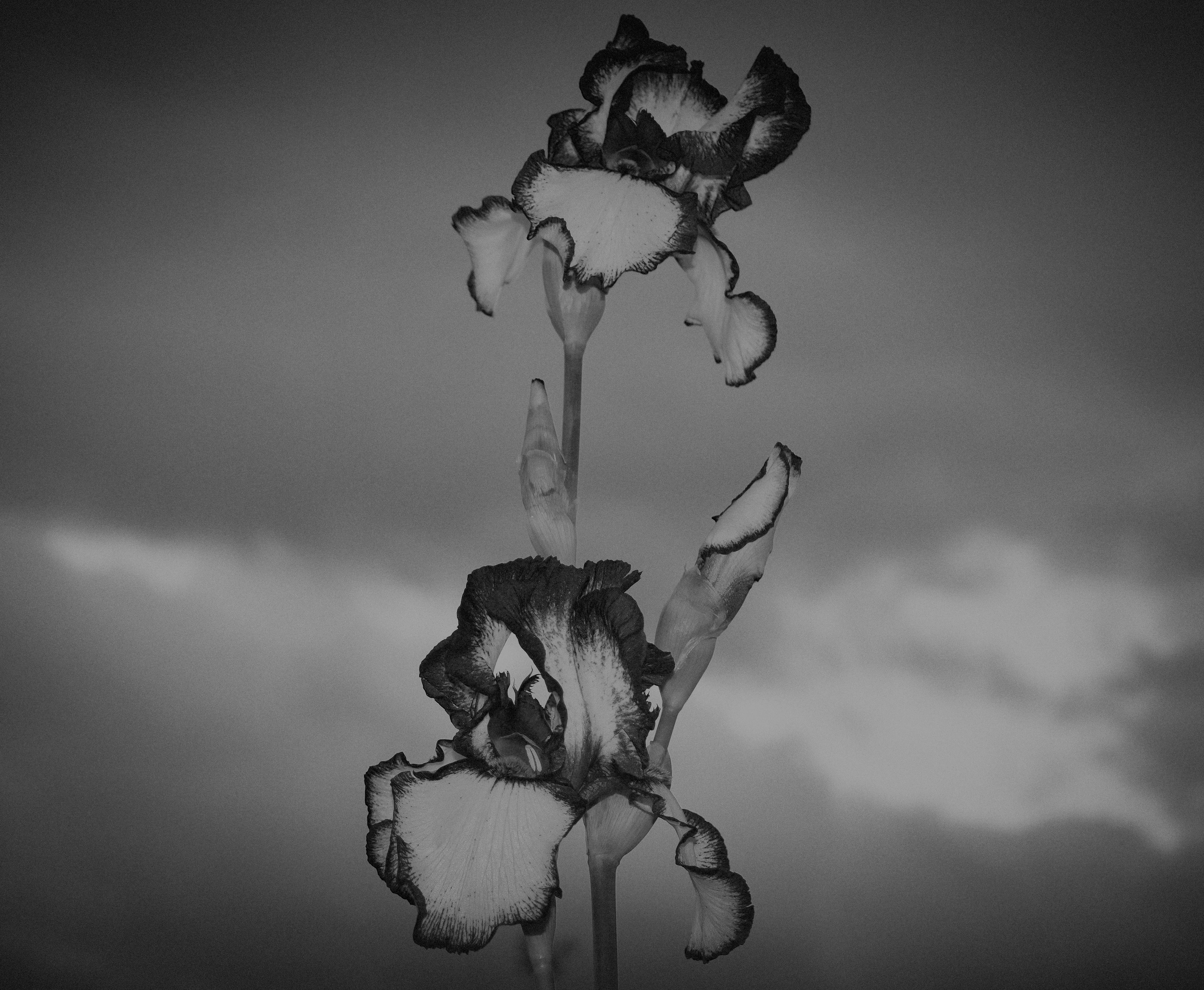 Iris in Clouds