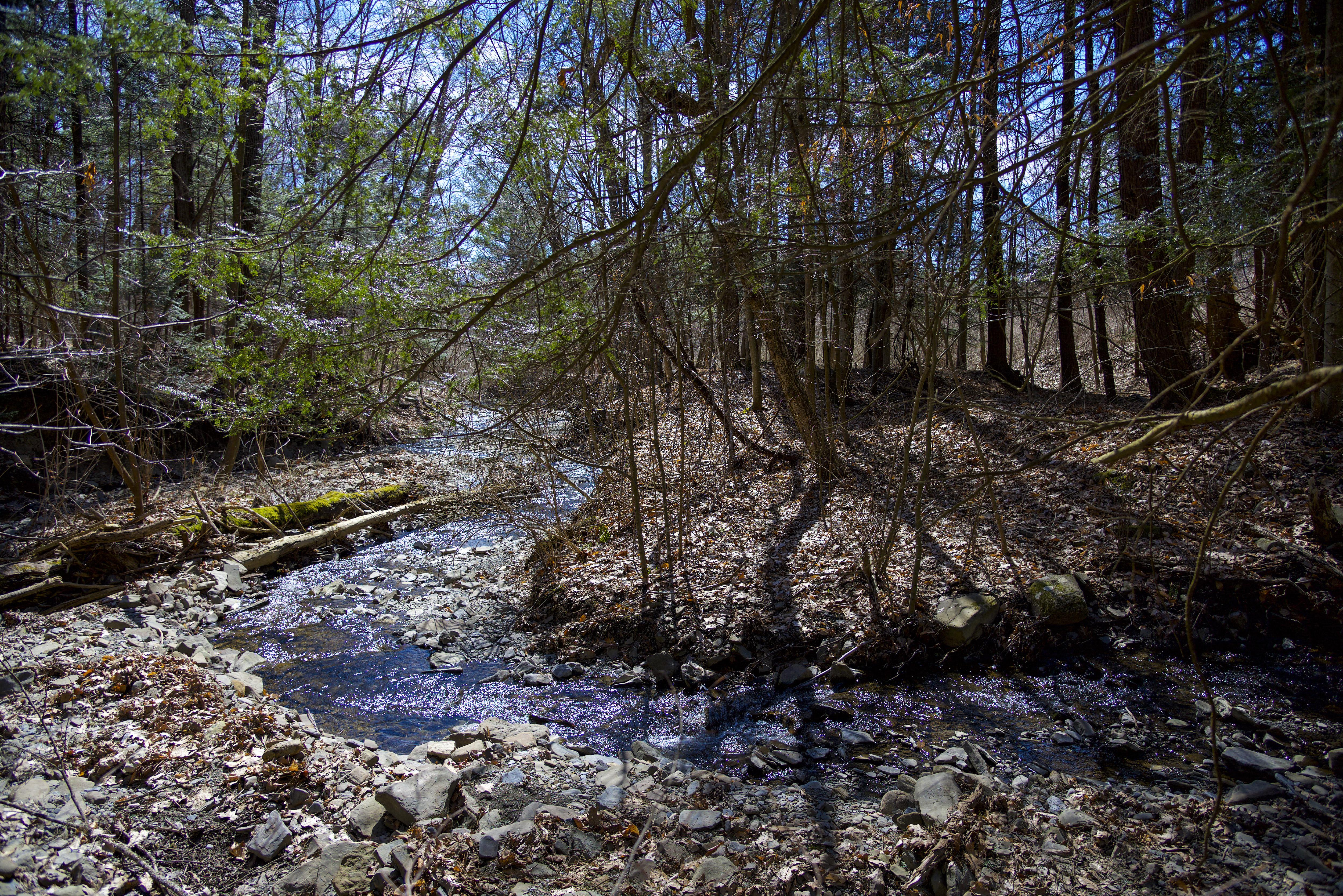Ellis Hollow FLLT Preserve
