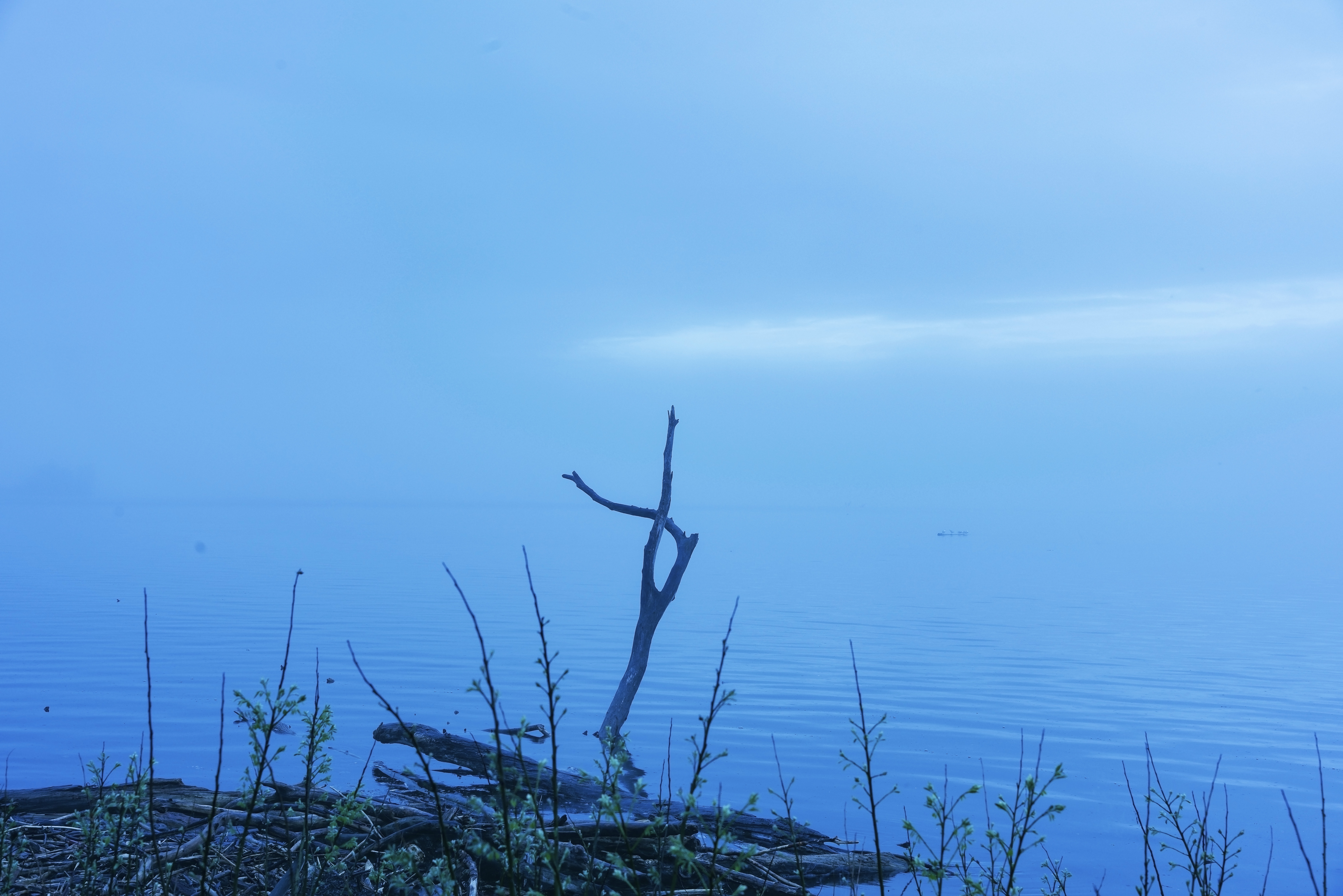 Art on Cayuga Lake in the Mist