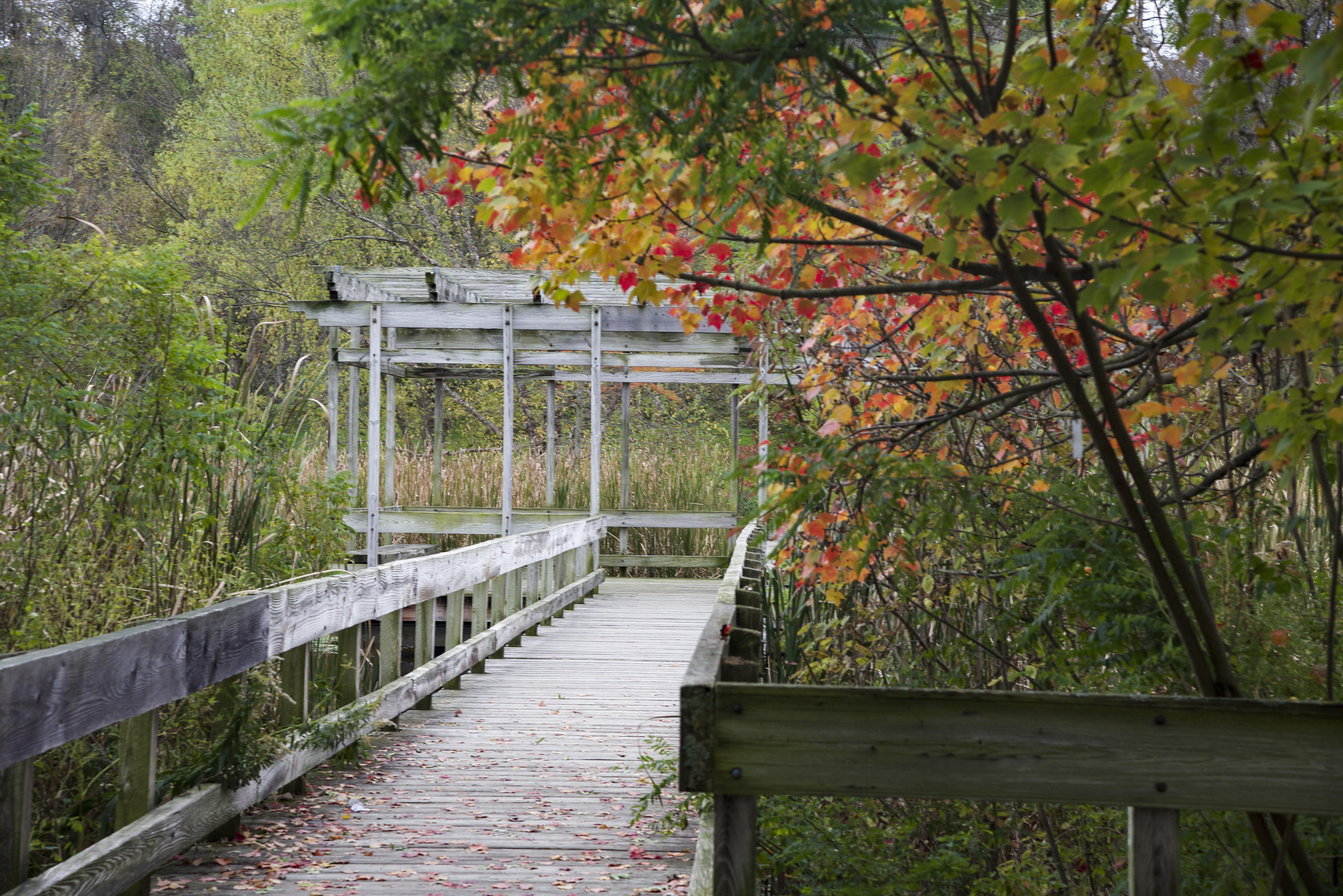 Cornell Botanic Gardens, Boardwalk