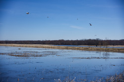 Northern Montezuma Wetlands