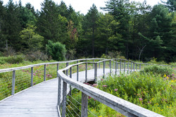 Roy Park Preserve