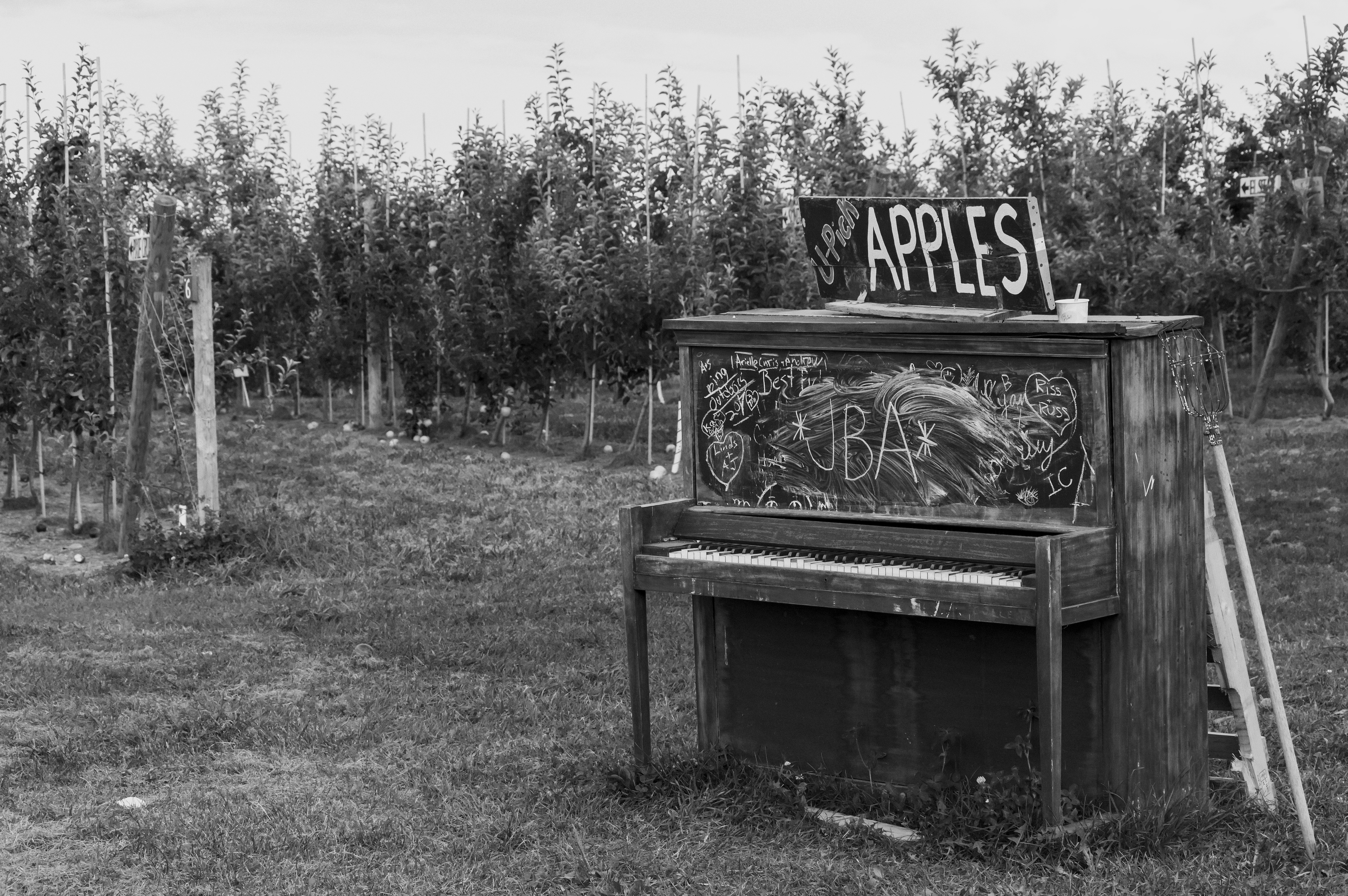 Indian Creek Orchard