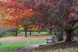Cornell Botanic Gardens, Arboretum