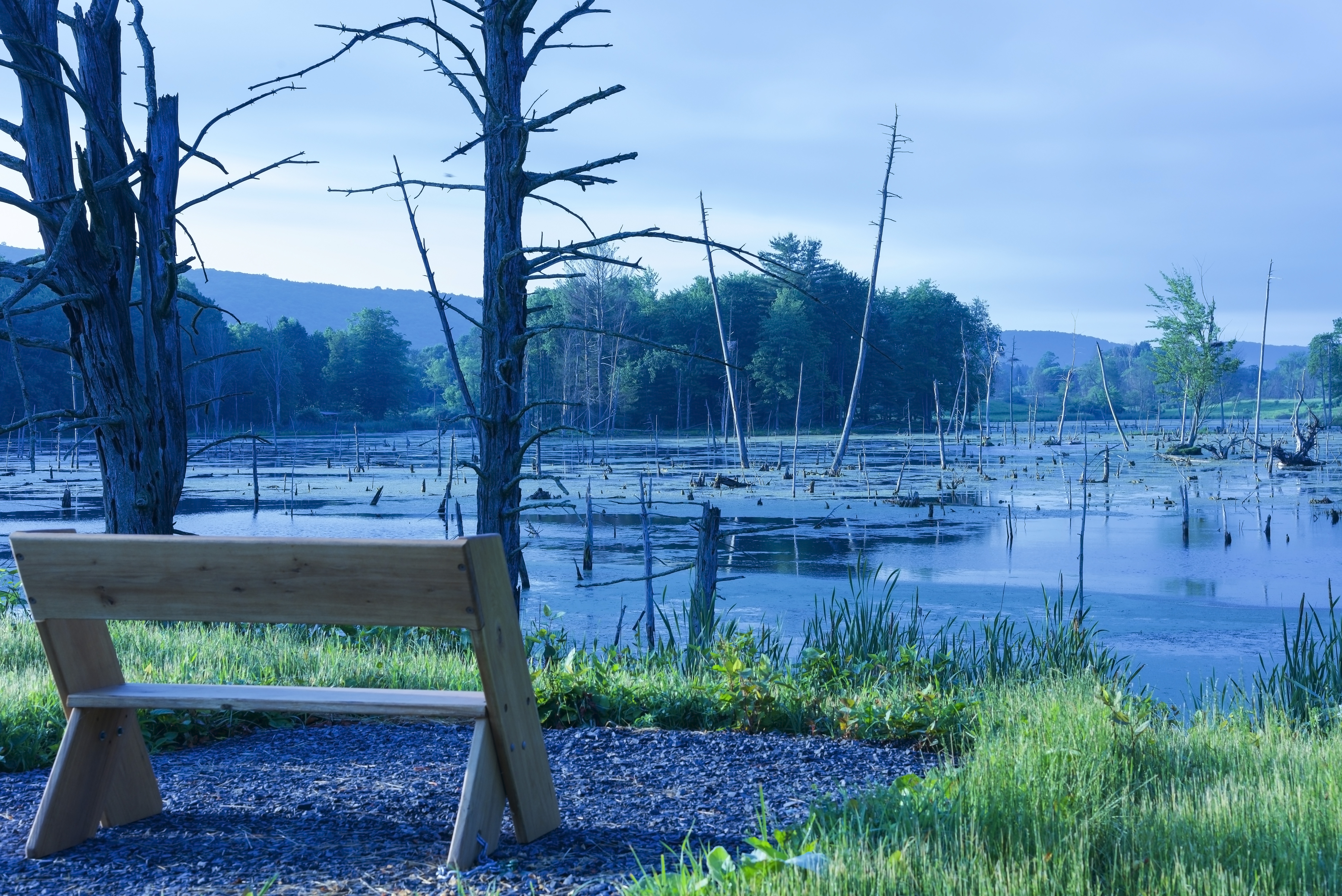 Lindsay-Parsons Wetland