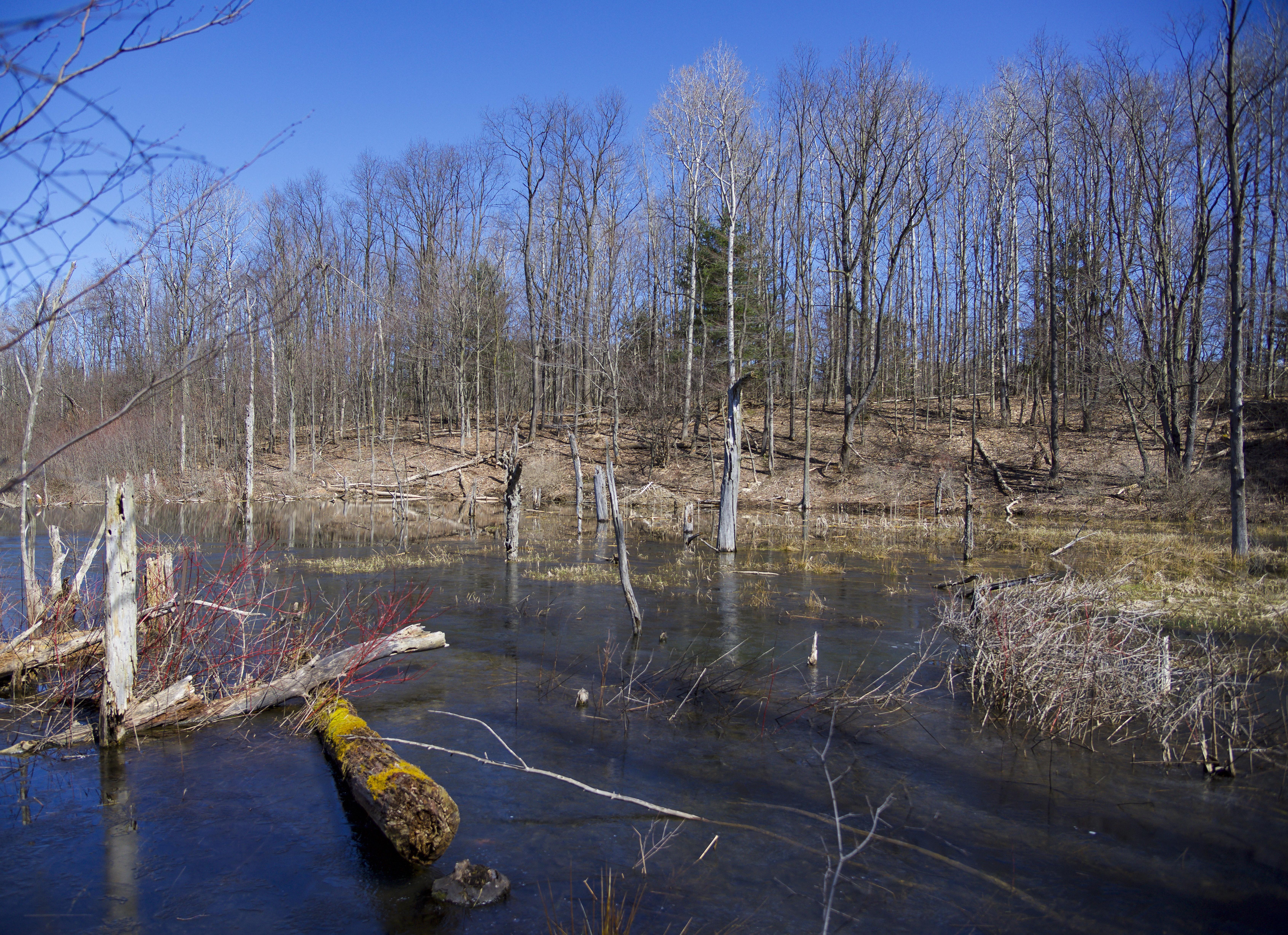 Purvis Wetlands