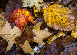 Fall Forrest Floor