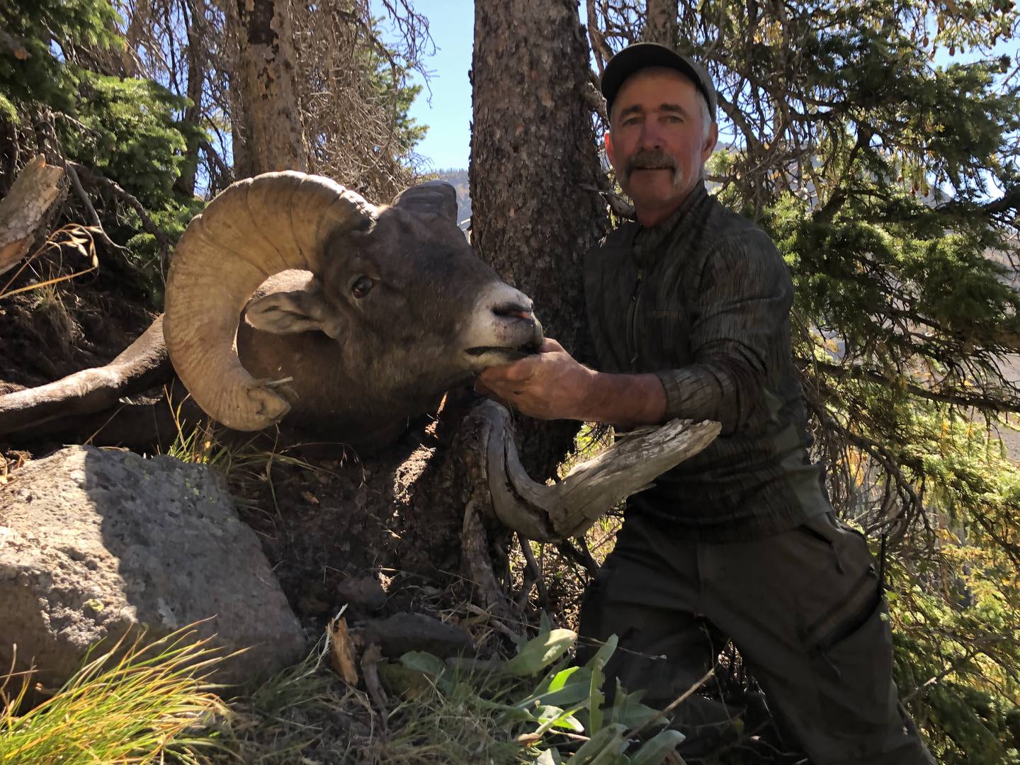 Lobo Outfitters, Big Horn Sheep Hunting