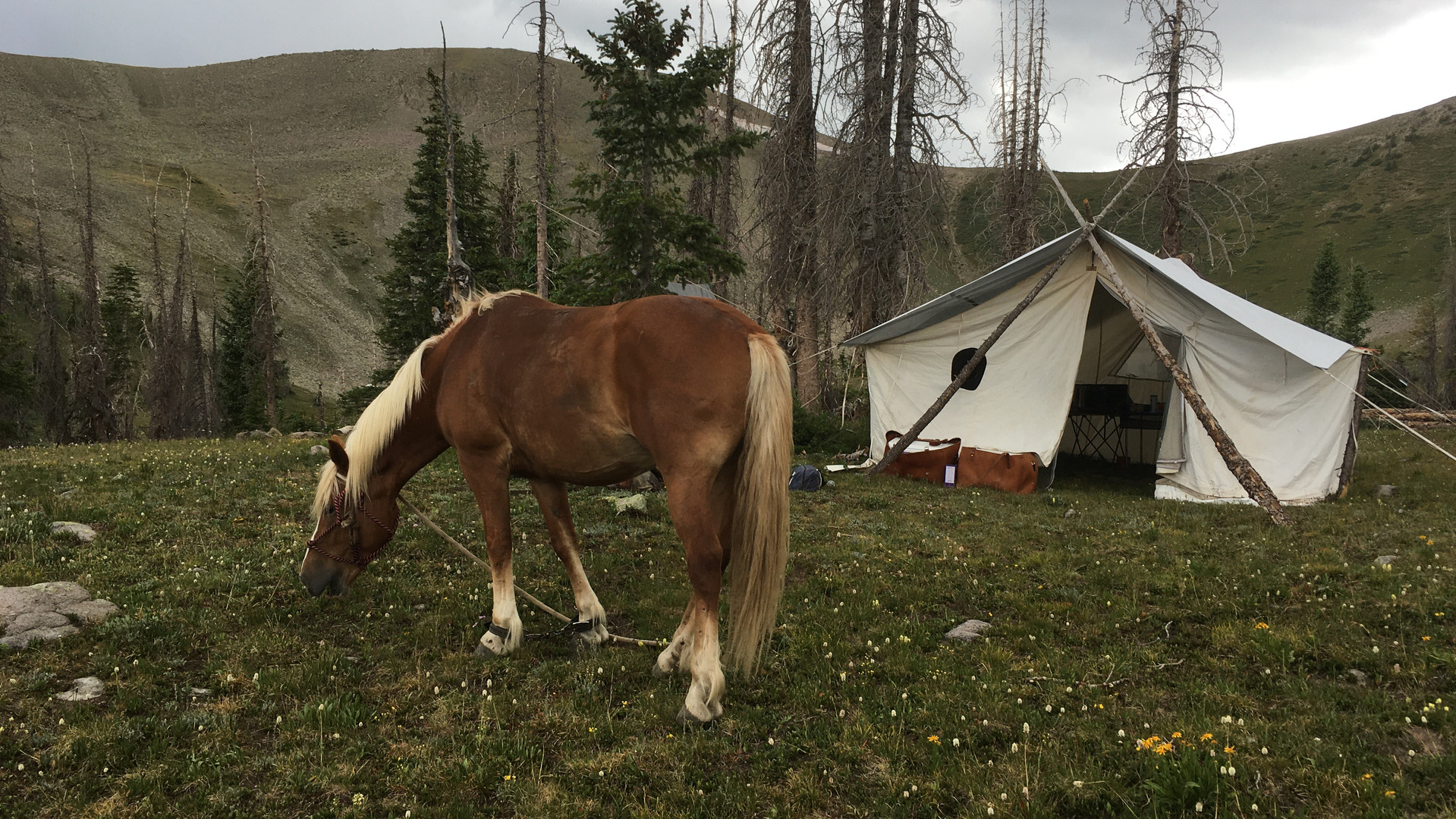 Lobo Outfitters, Packtrip, Horses