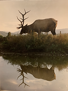Lobo Outfitters, Elk Hunting