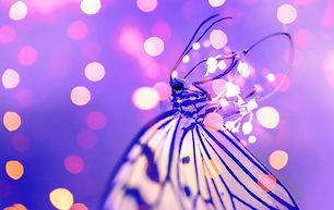 papillon-violet.jpg