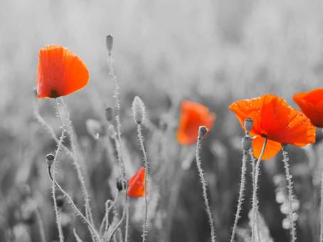 Stood Down on Armistice Day