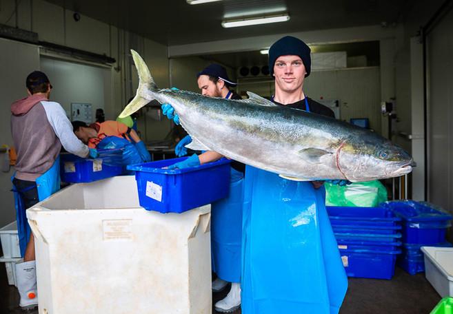 Esperance Kingfish