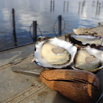 2. Appellation Rock Oysters Shucked_Pert