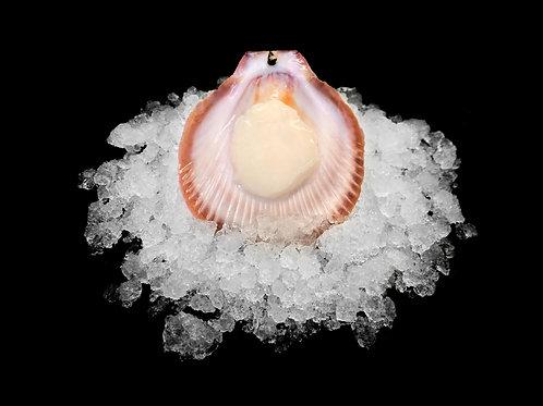 Shark Bay Scallops XL 1/2 Shell (8 doz ctn)