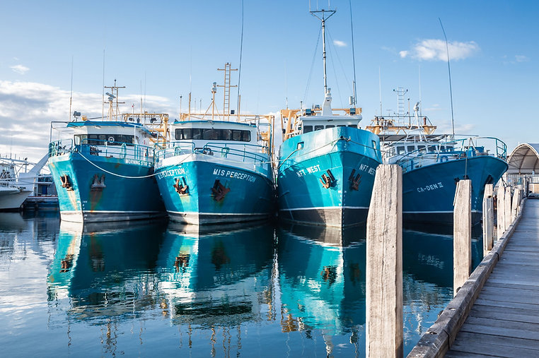 fremantle fishing boat harbour.jpg