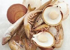 2. Rottnest Seafood_Perth Seafood Suppli
