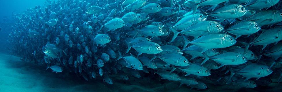 school of fish crop.jpg