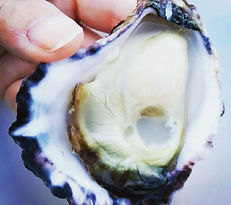 4. Appellation Rock Oyster Close Up_Pert