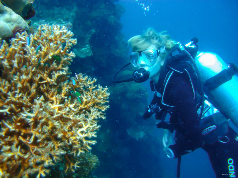Pleione Micronesia