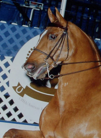 History of the Amercn Saddlebred Horse