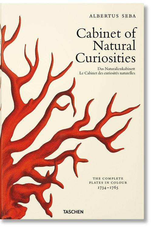 Cabinet de curiosités naturelles, grand format