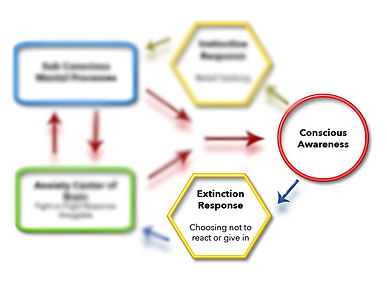 Treatment process of CBT using ERP