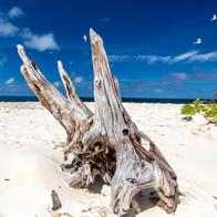 Wilson Island - pure white sands