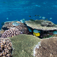 Spectacular coral - Wilson Island on the Great Barrier Reef
