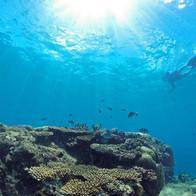 Wilson Island - explore the Great Barrier Reef