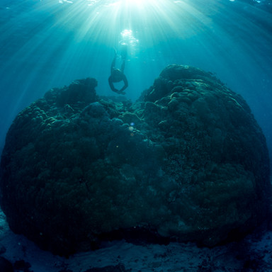 Wilson Island - dive amongst the coral