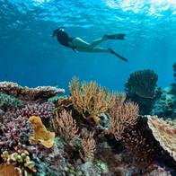 Wilson Island - The Great Barrier Reef