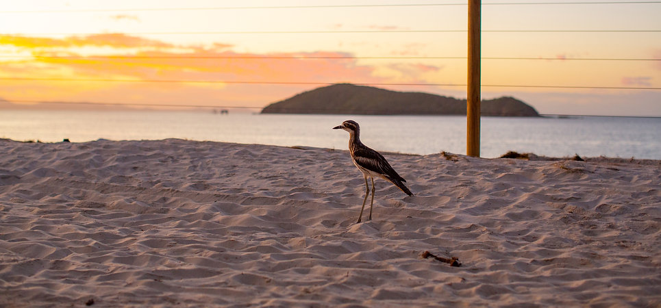 beachbird.jpg