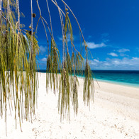 Wilson Island - step out of your tent and into the sea