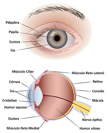 olho humano.jpg