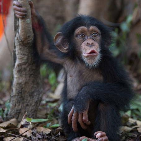 Lightning Scheduler Helps with Surgery. Plus, Chimps.