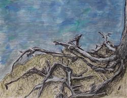 Intertwining Roots