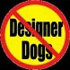 just say no to designer dogs.jpg