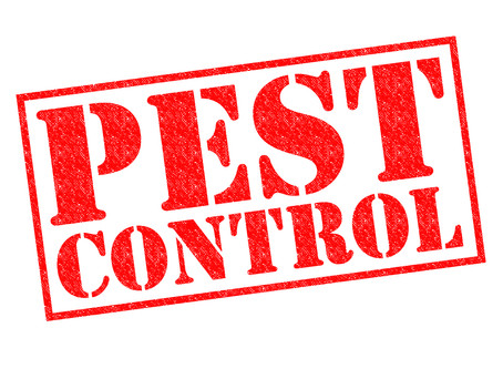 Helpful Home Maintenance: Keeping pests away