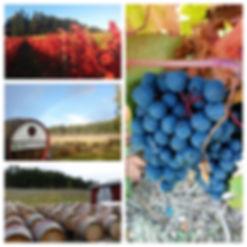 vineyard-9-_Fotor_Collage-768x768.jpg