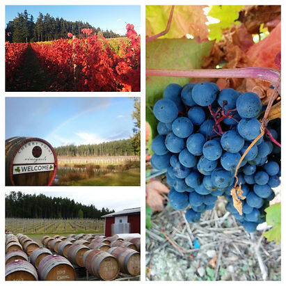 vineyard-9-_Fotor_Collage-768x768.jpg