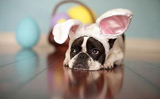 easter bunny boston.jpg